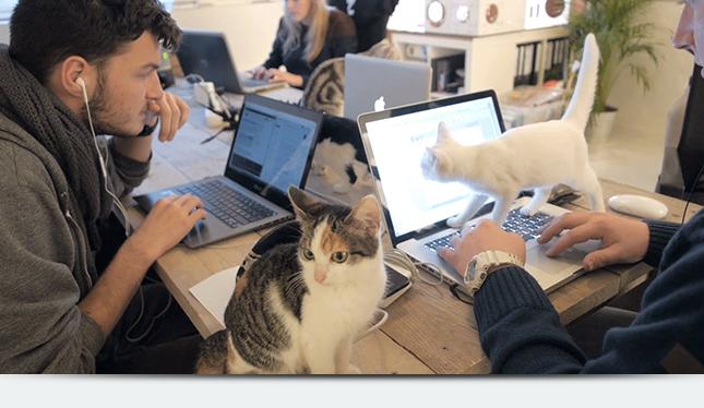 Что нужно учесть, заводя на работе животное?