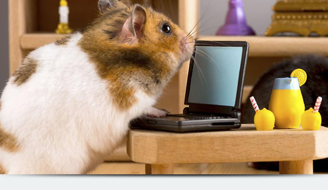 Какое животное лучше человека приспособлено для офисной жизни?