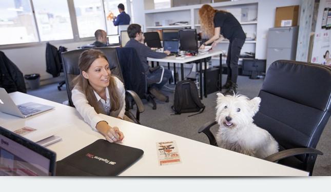 Животных можно приводить на рабочее место, а не заводить в офисе